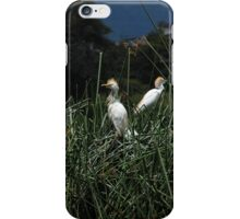 Snowy Egret Chicks on a Nest iPhone Case/Skin