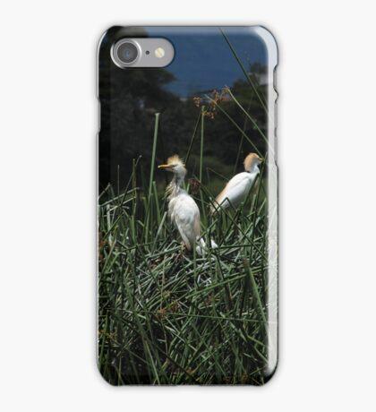 Snowy Egret Chicks on a Nest iPhone Case/Skin