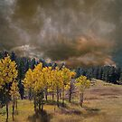 4228 by peter holme III
