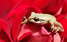 Frog in red by Kerry  Hill