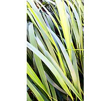 Reeds of Leaves Photographic Print