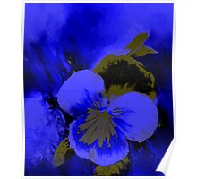 Night Blue Pansy Poster