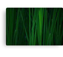 Tall Grass Close Up Canvas Print