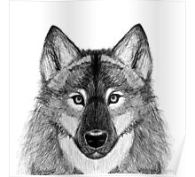 Grey Scale Wolf Portrait Poster