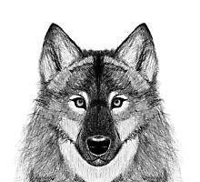 Grey Scale Wolf Portrait Photographic Print