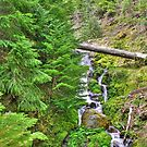no name creek by Bruce  Dickson