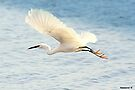 Freedom of Flight by naturelover