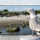 Gull on the Outside ~ Looking Back by SummerJade