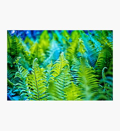Photo of green fern growing in forest Photographic Print
