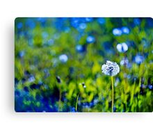 Beautiful white dandelion with seeds on blue green background Canvas Print