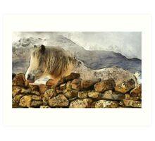 Highland Horse Art Print
