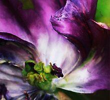 Iris inside by RosiLorz