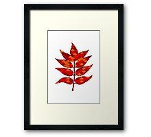 Ash leaves Framed Print