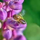 Bee descending on a lupin by Mark Bangert