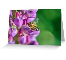 Bee descending on a lupin Greeting Card