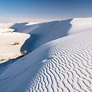 White Sands by J. Day