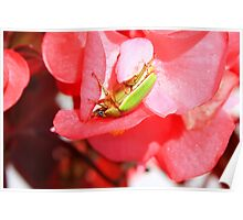 Green Beetle on a Flower Poster
