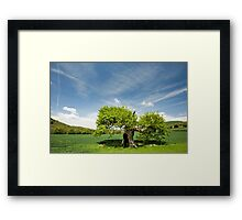 Old Oak Tree in Spring Framed Print