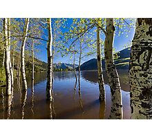 Aspens in Smith and Morehouse  Photographic Print