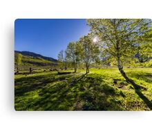 Sunrise on a pasture full of sheep Canvas Print