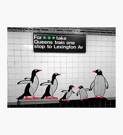 NYC Subway Penguins Photographic Print