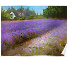 Lavender Field and Farm House Landscape Oil Painting Poster