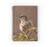 Male Sparrow Spiral Notebook