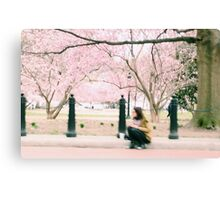 Washington Cherry Blossoms Canvas Print