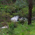 Wet Woodlands by lezvee