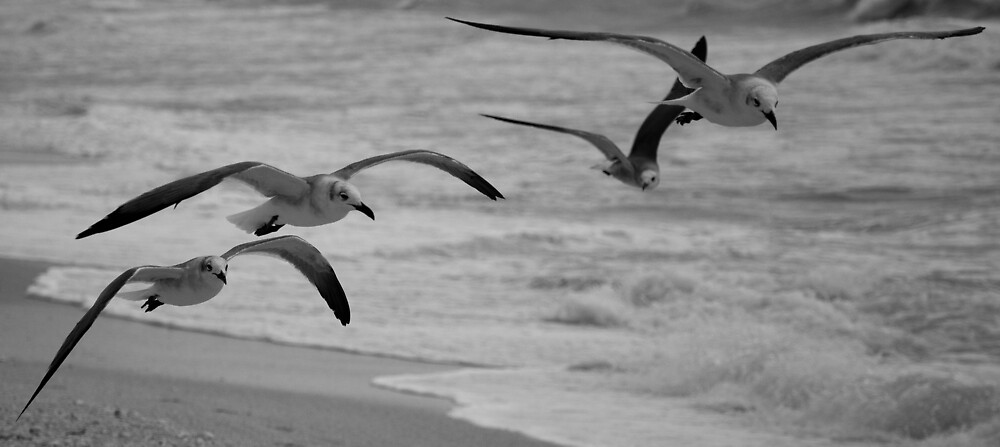 Flight  by John  Kapusta
