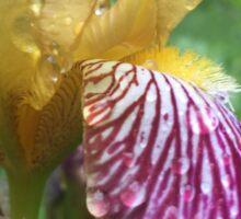 Iris rain yellow Sticker