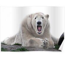 Singing bear Poster