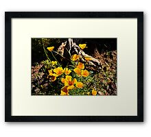 Oh There Is Sunshine Framed Print