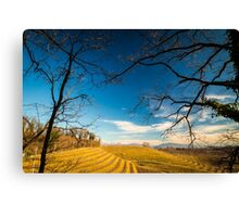 Vineyard in late winter Canvas Print