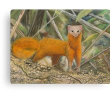 Malay Weasel Pastel Painting Canvas Print