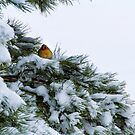 Snow Bird by martinilogic