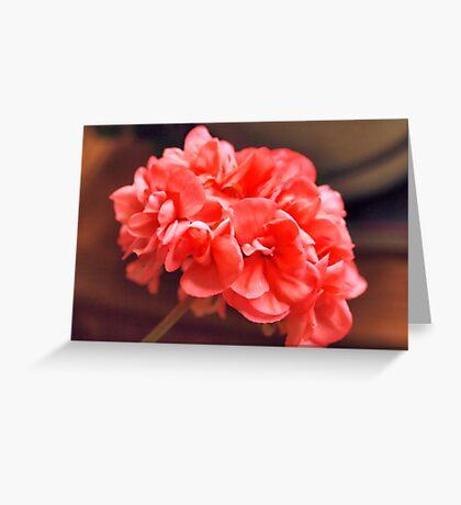 Sarah's Geranium Greeting Card