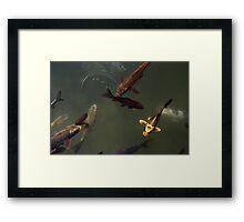 Koi at Belle Isle Framed Print