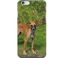 Puppy in a Field iPhone Case/Skin