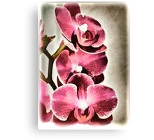 Orchids From Lynn Canvas Print