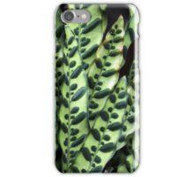 Rattlesnake Plant iPhone Case/Skin