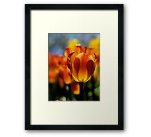 Brown Sugar Framed Print