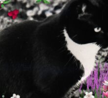 Freckles in Flowers II - Tuxedo Cat Sticker