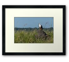 African fish eagle perched on termite mound Framed Print