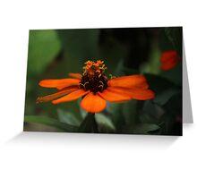 Orange Zinnia~ Greeting Card