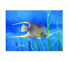 Into Blue - Tropical Fish by Sharon Cummings Art Print