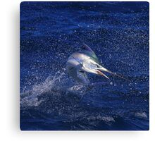 Marlin Canvas or Print - Juvenile Black Marlin Canvas Print