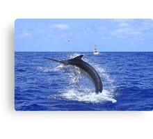 Marlin Canvas or Print - Giant Black Marlin Head Shake Canvas Print