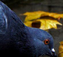Thirsty Pigeon Sticker