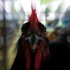 Chicken Close Up by Jessica Liatys